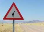 15 Namib Rand